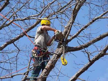 Tree Trimming in Mason OH