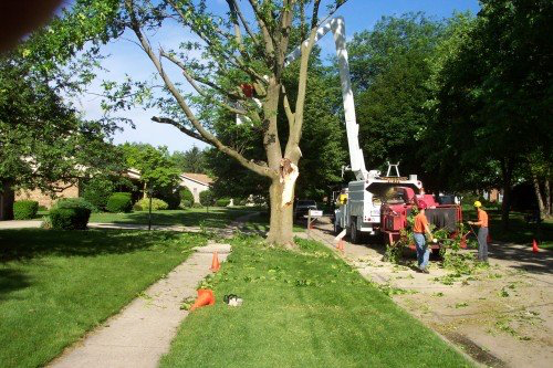 Utility Line Tree Trimming in Lebanon, OH